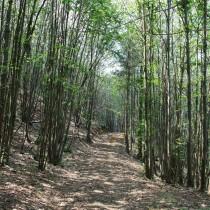 Bosco di Sassello