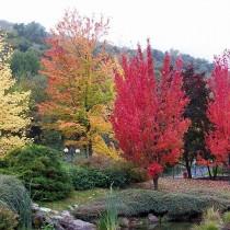 Il foliage d'autunno in Valle d'Aosta